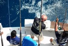 Big Game Fishing mit Skipper
