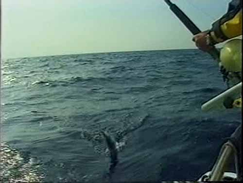 Big game fishing with skippered charter for Big fish games phone number